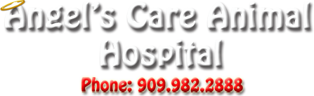 Angel's Care Animal Hospital